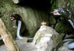 Rùng mình về rắn thần báo oán ở Thái Nguyên