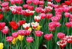 Tính cách của bạn sánh với loài hoa nào