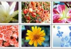 Cách chọn hoa lé lộ tình yêu của bạn