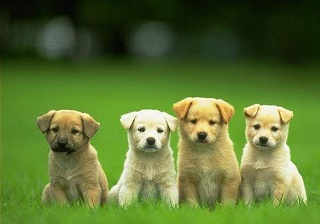Giải mã giấc mơ khi mơ thấy cún cưng