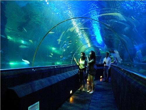 Thủy cung có đường hầm đầu tiên tại Hà Nội