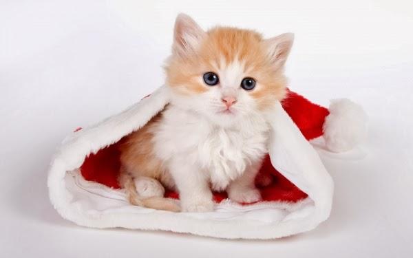Nằm mơ nhìn thấy mèo con dễ thương
