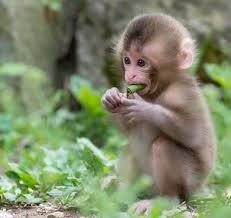 mo thay khi Tìm hiểu về ý nghĩa giấc mơ khi mơ thấy Khỉ