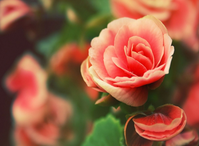 Xem tử vi tháng 3/2019: Top con giáp vượng vận đào hoa, tình đẹp như mơ