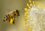 Mơ thấy ong gửi tới thông điệp gì? Gợi ý những con số may mắn nào?