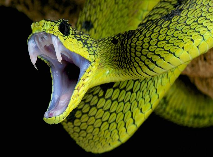 Mơ thấy rắn cắn dự báo điềm gì? Gợi ý những con số may mắn nào?
