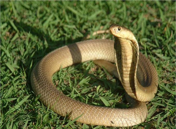 Mơ thấy rắn đuổi gửi tới điềm báo gì? Gợi ý con số nào?