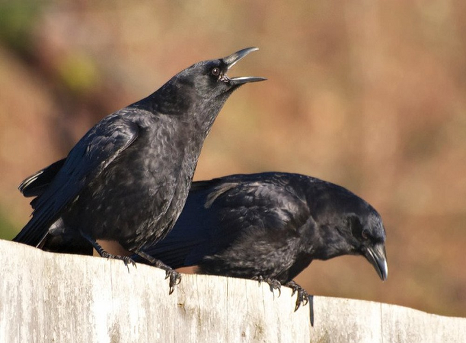 Giải mã hiện tượng chim bay vào nhà dưới góc nhìn tâm linh