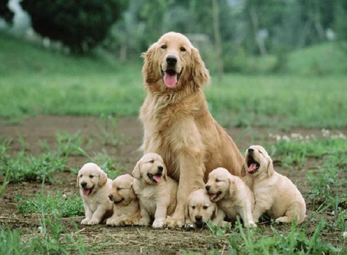 Mơ thấy chó đẻ gửi tới điềm báo gì? Gợi ý những con số may mắn nào?
